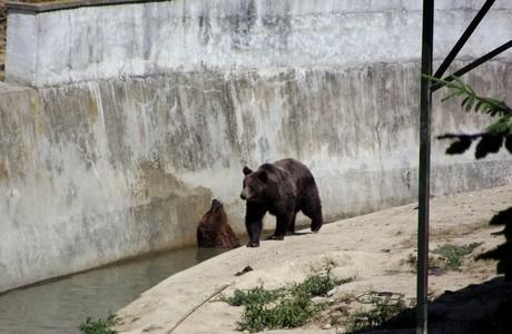 urs 2 zoo